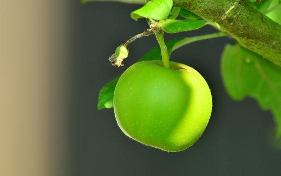 Ovoce nejspíše umrzne na stromech