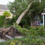 Jak postupovat, když váš majetek poškodí vichřice?